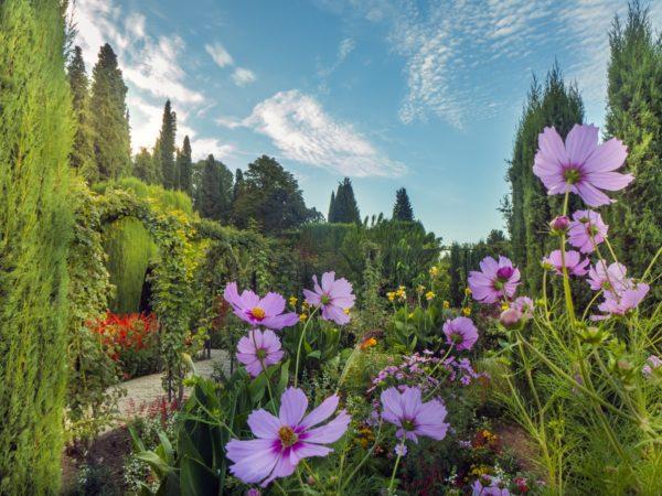 GENERALIFE CVALCAZcosmos jardines bajos Generalife P1210408 web